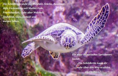 Schildkrötenparade – Einstiegspost